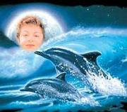 eu e os golfinhos