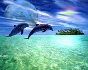Dolphin 07