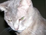 CHOU 2007