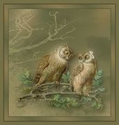 Aves e Pássaros (565)
