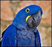 Aves e Pássaros (543)