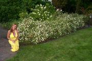 Giselle e flores brancas