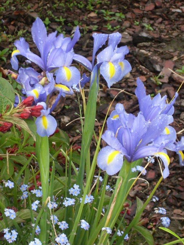 Flores da Normandia França