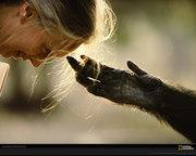 goodall-touch-122635-xl