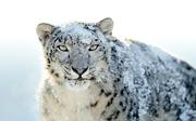 Leopardo lindo!!!!!!!