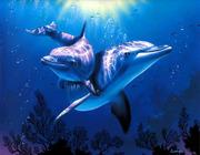golfinhos1