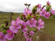 Flores do Gerais do
