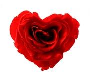 Rosa de Coração!