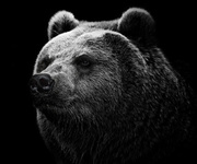 Big_Bear-wallpaper-10485413