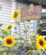 Ant Hill Cooperative