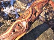 Diamond Willow carving