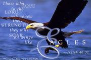 Isa 40-31 eagles