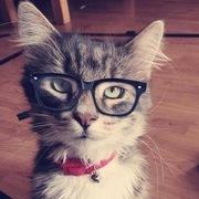 Josiah(Classy Geekster Kitteh)