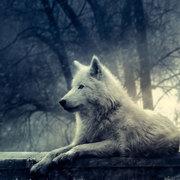 Casey (Wolfpire)