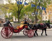 horse & buggy ride, quebec city