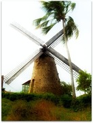 windmill, barbados