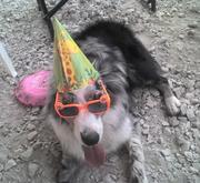 Abbies_First_Birthday