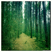 serenbe journal pedro on pine trail