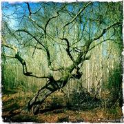 serenbe journal magic tree