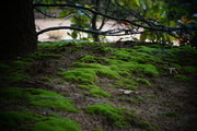 Moss on Sandlot