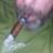 Paul le Pipe