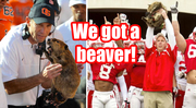 Beaver Mike Riley is New Nebraska Head Coach