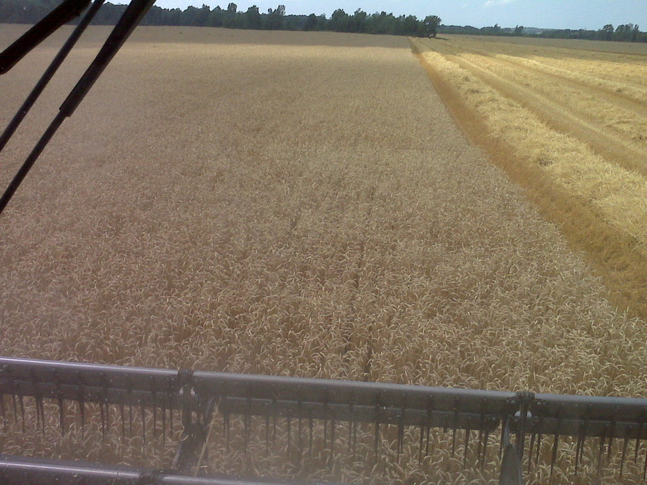 2009 Wheat Harvest