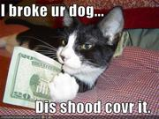 DAMN-Cats-are-Funny-animal-humor-4133529-500-375