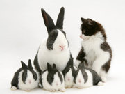 kittenbunnyfamily