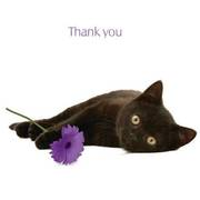 black kitten says thanks
