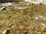 ophir canyon day trip and my first you tube video 015
