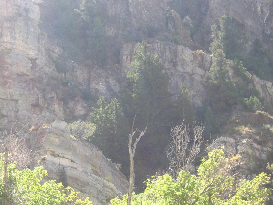 ophir canyon day trip and my first you tube video 007