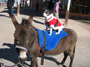 Dog and Donkey Show