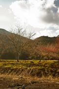 Fujieda Landscape