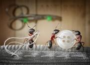 249882-andrey-pavlovs-amazing-ant-photography