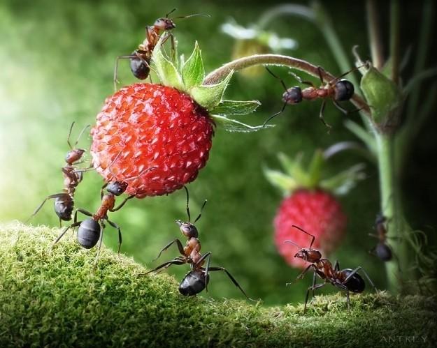 249886-andrey-pavlovs-amazing-ant-photography