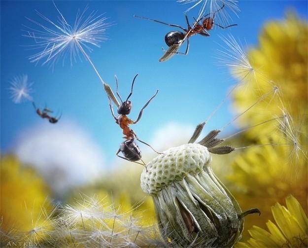249887-andrey-pavlovs-amazing-ant-photography