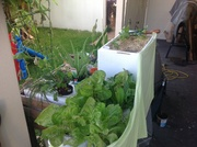 Kratky and self watering boxes
