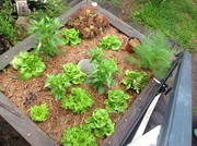 From grow bed to wicking bed