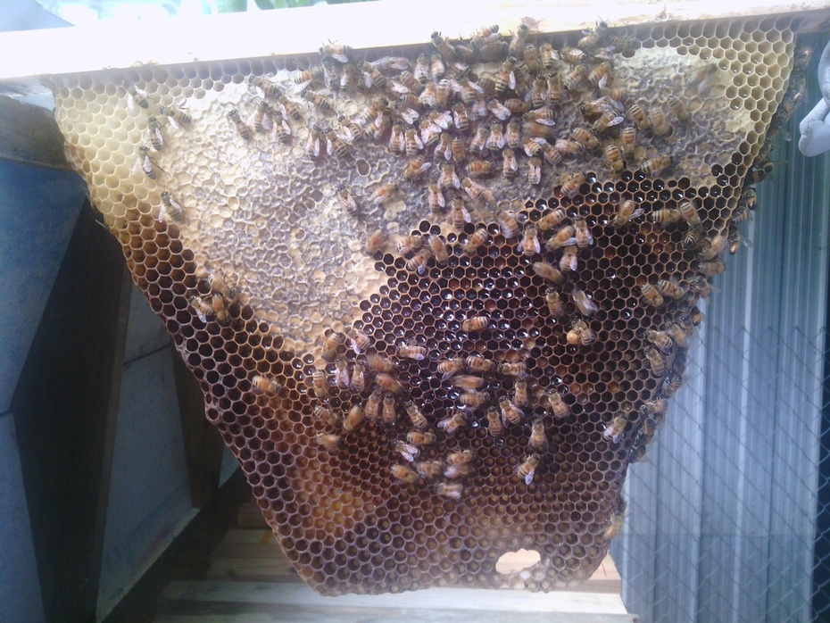 Capped honey and no brood cell