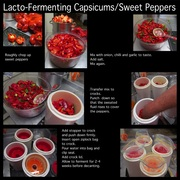 Lacto-Fermenting Capsicums/Sweet Peppers