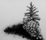 Long_R_8_Drawing_Pinecones
