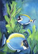 Sturgeon Fish Jbbackus