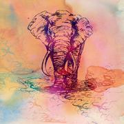 waterelephant