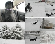 2007 winter collage