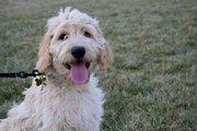 Oliver (13-20 weeks)