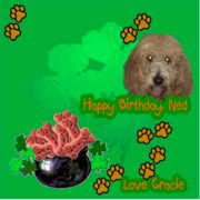 Ned's First B'day Pawtee