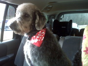 first trip to the groomer
