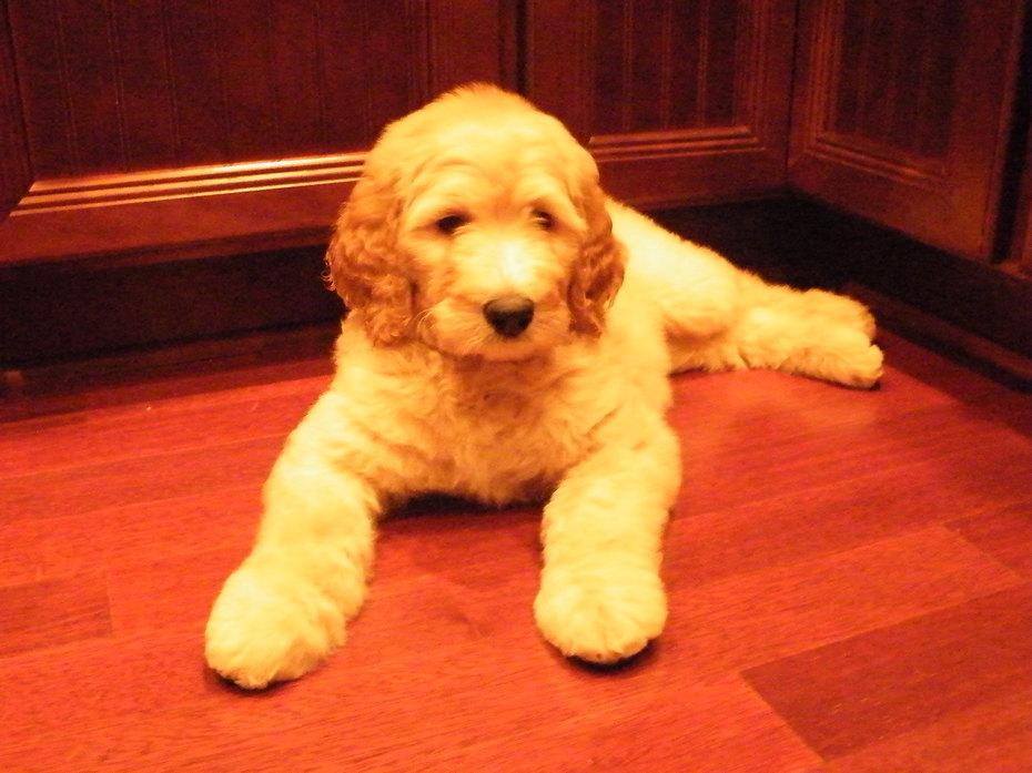 Samson 10 weeks