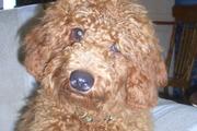 Jasper's Homecoming - June 2010
